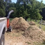 Lots Of Mulch From The Dozens And Dozens of Trees The Friends Of Eastern Cemetery Have Cut.