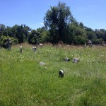 This Older Photo Shows An Area That Has Now Been Mowed By The Friends of Eastern Cemetery